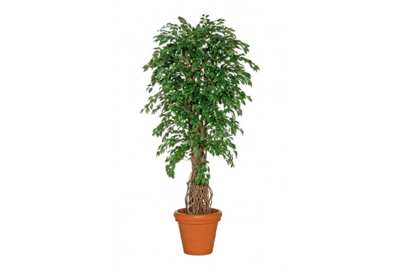 Kunstplant 2